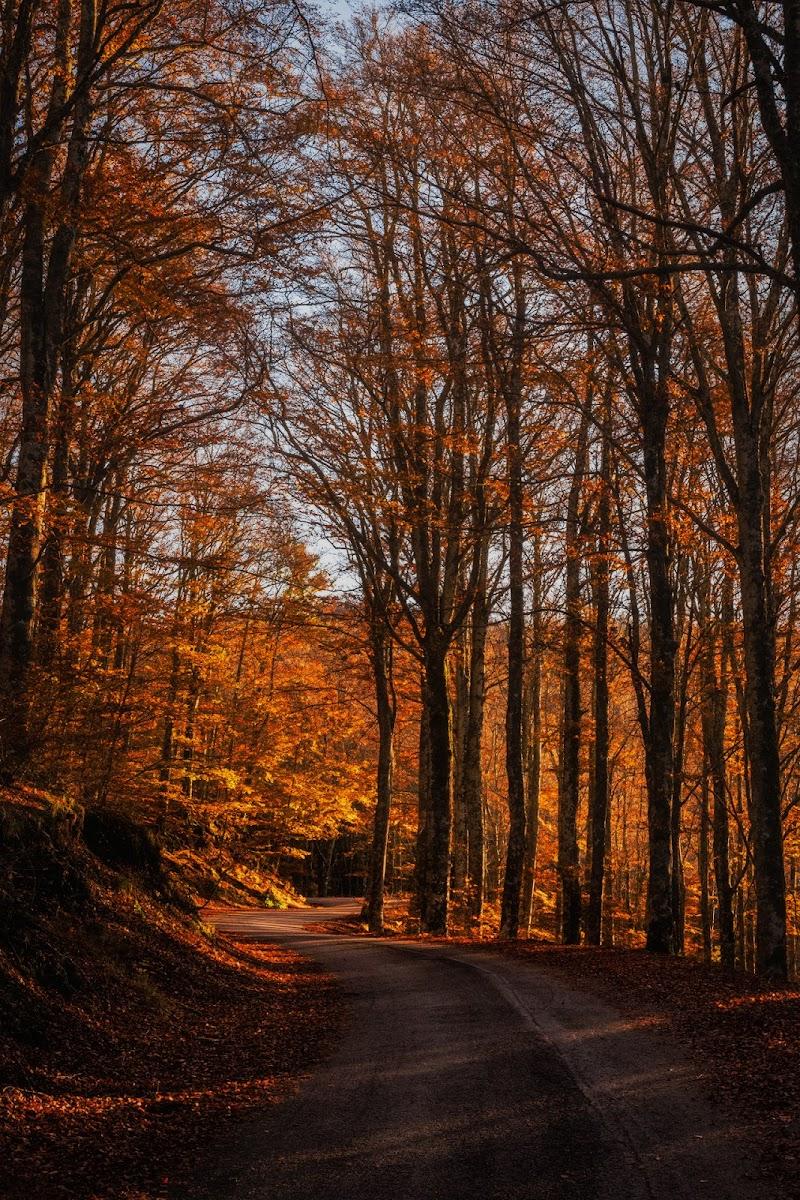 Autunno Arancio  di #giannigalliphoto