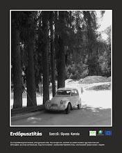 Photo: RO: Despădurire Această fotografie a fost făcut la Băile Bálványos, unde este o pădure frumoasă, aer curat, dar în ultimii ani au tăiat multe copaci din cauza unui hotel. Această fotografie demonstrează că deși din punct de vedere turistic s-a dezvoltat locul, dar încet-încet natura va fi distrusă.  EN: Deforestation This photo was taken in Bálványos, where is a beautiful forest, fresh air, but in the last years many trees were felled because of a hotel. This photo proves that the place developed touristically but the nature slowly will be destroyed.