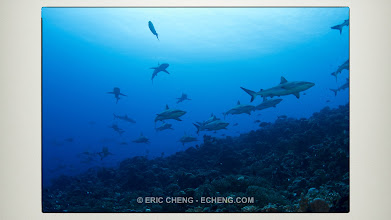 Photo: Hundreds of reef sharks. A still in no way captures what it was like to be there.