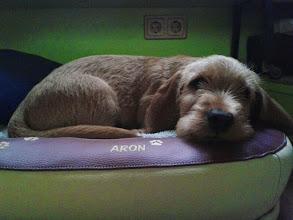 Photo: Aron