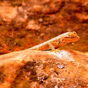 Lucy the lizard by Keysha Wallace-Patton - Animals Amphibians