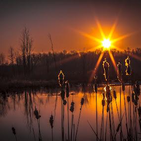 Iroquois Wildlife Sunrise by John Witt - Landscapes Sunsets & Sunrises ( refuge, wildlife, sunrise, pond,  )