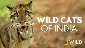 Wild Cats of India thumbnail