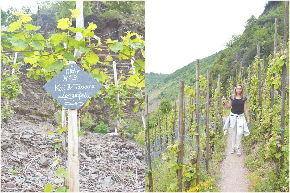 duitsland-alles-over-riesling-wijnen