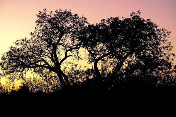 south africa di julia monero
