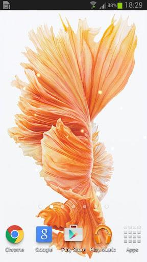 玩免費個人化APP|下載Betta Fish 6S Live Wallpaper app不用錢|硬是要APP