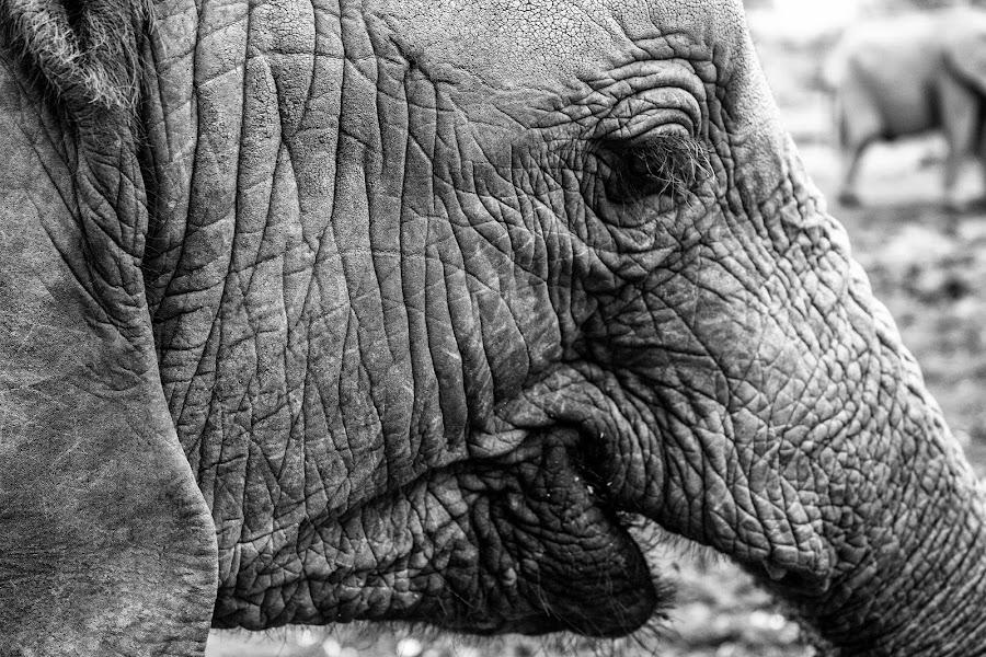 Orphan Elephant by Ebtesam Elias - Animals Other ( elephant, kenya, wildlife, travel photography )