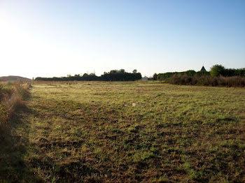 terrain à Maille (85)