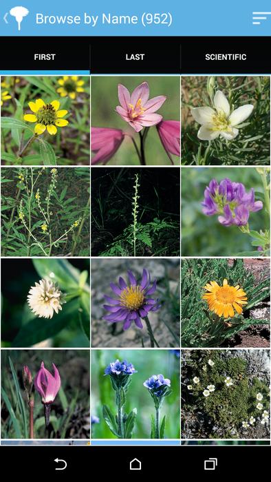 Audubon Wildflowers California - screenshot