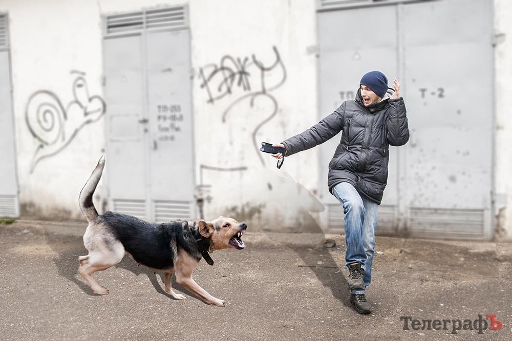 Не можна панікувати і бігти при зустрічі з бродячим собакою