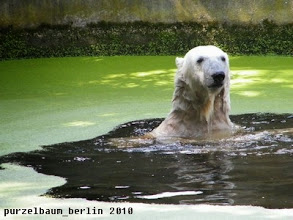 Photo: Gute-Laune-Knut :-)