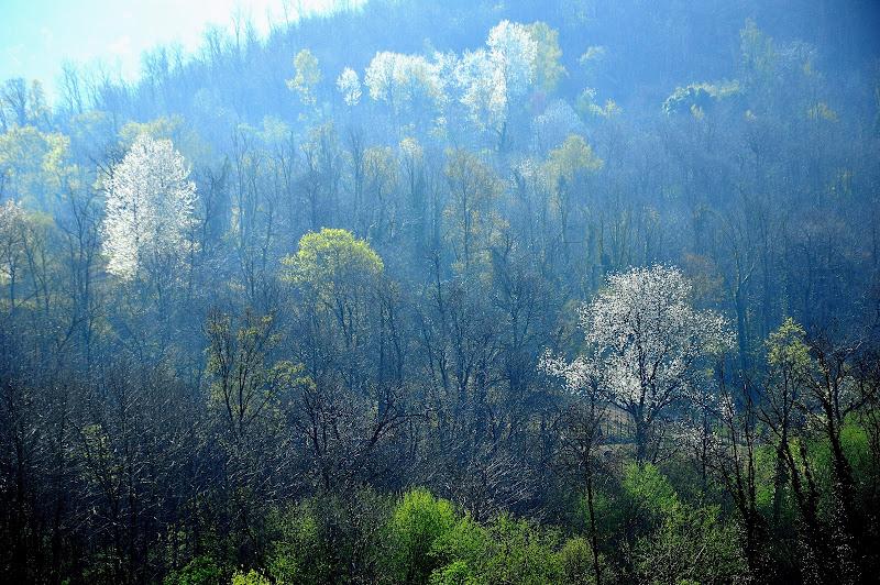 E i boschi si vestono di nuovi colori di Cary