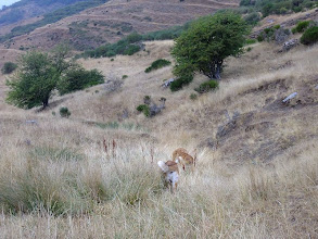 Photo: in the mountains near of Leon