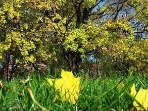 Photo: barwy jesieni