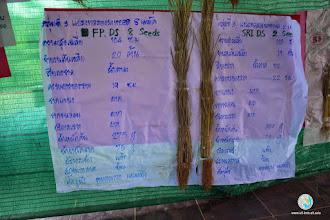 Photo: Presentation of data of the tillering stage , TOT4 , Tron , Uttaradit