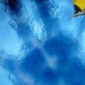 Yellow Orange Fish LWP icon