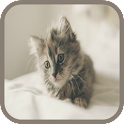 Kitten Sounds and Puzzles Free icon