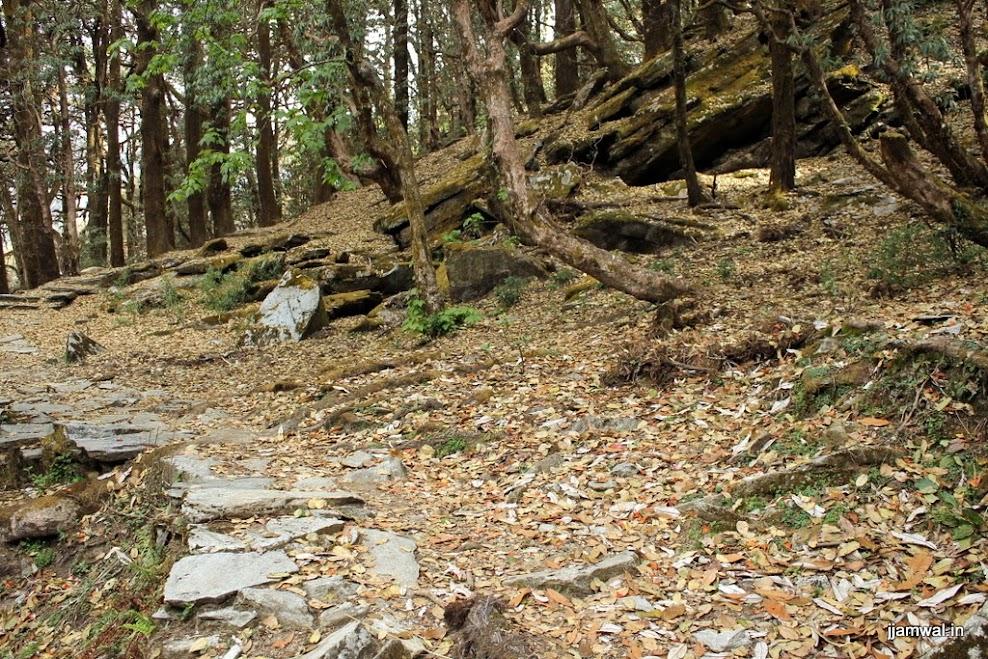 Trek route through jungle