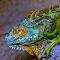 Iguana Armor.jpg