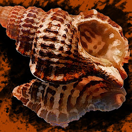 Lovely Sea Shell by Dave Walters - Digital Art Abstract ( macro, nature, lumix fz2500, abstract, colors, digital art )