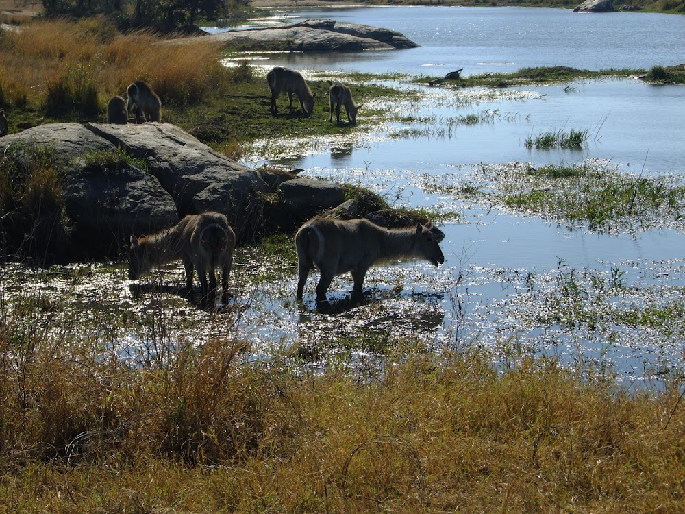 SANParks reopens for self-drive day excursions after two months