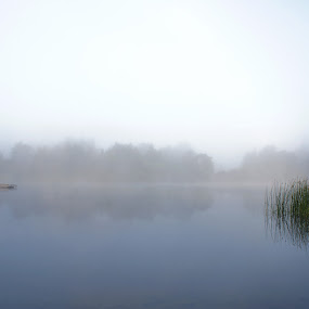 LONELY GREEN by Blerim Havolli - Landscapes Waterscapes ( porsgrunn, watterscape, reflection, foggy, green )