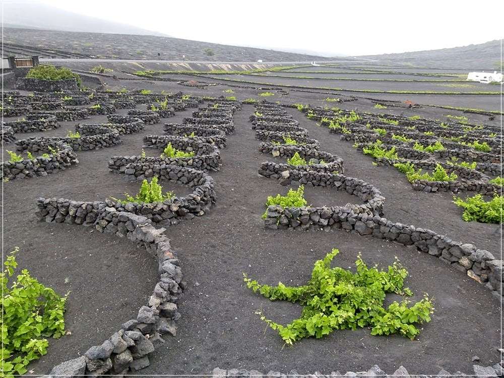 La Geria, os vinhedos inusitados de Lanzarote