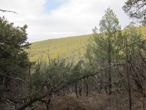 Photo: Ridge very much like the MMT ridge in Va.