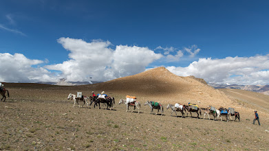 Photo: Our gear was carried up Lungser Kangri all the way to 6000m by our wonderful horse-mule team. Ram Lal, you are a star!