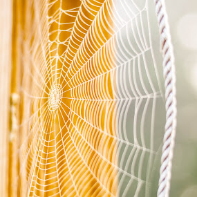 Spider web in fog by Judy Soper - Nature Up Close Webs ( spider webs, soper, web, bokeh, spring, spider web, bugs, ohio, fog, fremont, fall, summer, spider )
