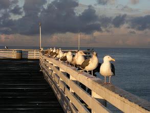 Photo: Seagulls, Crystal Pier, San Diego, California