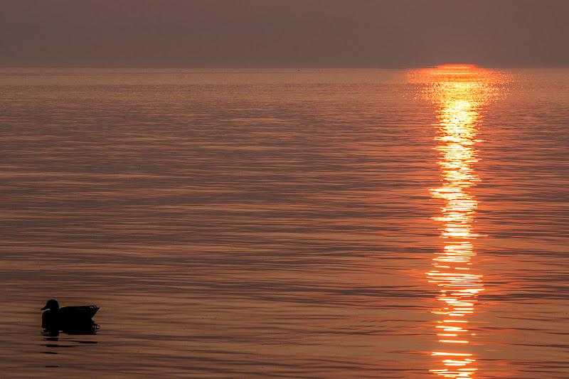 paperella a tramonto di PaolaTizi