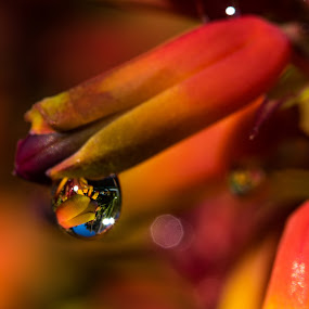Aloe Drop by Simon Hall - Nature Up Close Natural Waterdrops (  )