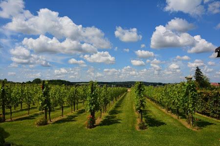 Wijngaarden 2016