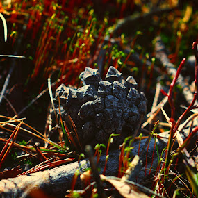 Pinecone by Juliusz Wilczynski - Nature Up Close Other Natural Objects