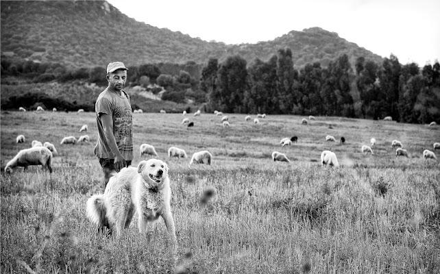 Amore e Pastorizia di Rino Lio