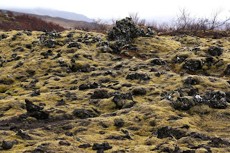 Photo: Moss covered lava field at the foot of Grábrók.