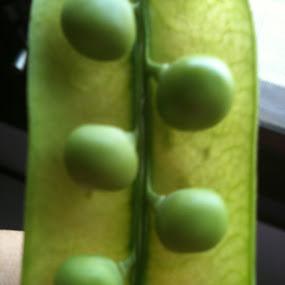 green peas by Siddharth Nayak - Food & Drink Fruits & Vegetables ( satabdi nayak, khitish nayak, khirabdi nayak )