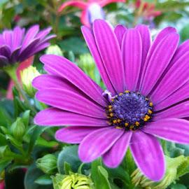 At the flower market l. by Helena Moravusova - Flowers Flower Arangements ( flowers )