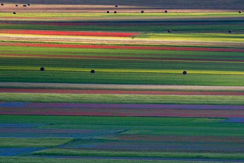 Colours di RobertaSilvestro