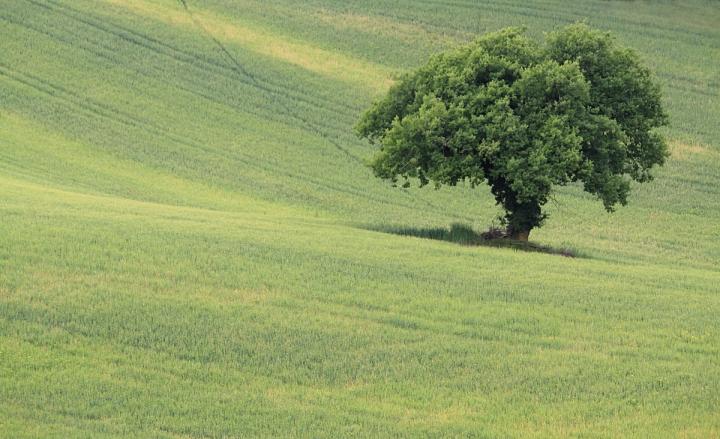 Nel Verde di fabrizioolivi
