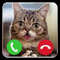 Talking Cat Calling Prank icon