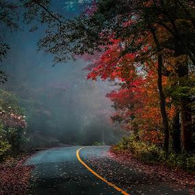 mystical autumn by Sunil Pawar - Landscapes Forests ( parkway, beautiful, travel, blueridge, north carolina, mystical, season, nature, autumn, blue, fog, fall, background, light,  )