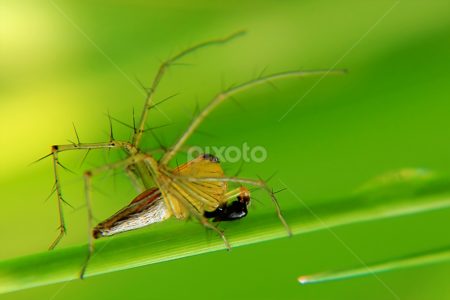 Spider.. by Irsanto Aniswar - Novices Only Macro