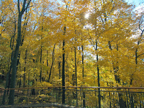 Photo: Golden forest by a fence at Hills and Dales Metropark in Dayton, Ohio.