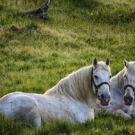 by Brenda Baird - Animals Horses