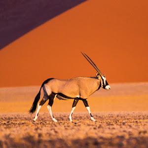 Namibie3
