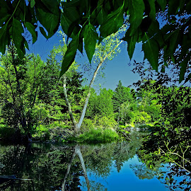 Peaceful Reflections by Bill Diller - Landscapes Waterscapes ( pond, forest, green, reflection, michigan, reflections, woods, tree, pattern, tranquil, water, trees, peaceful, calm, blue, calmness, tranquility, river )
