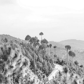 From the top by Muhammad Gujjar - Black & White Landscapes ( hills, tree, black and white, road, top,  )