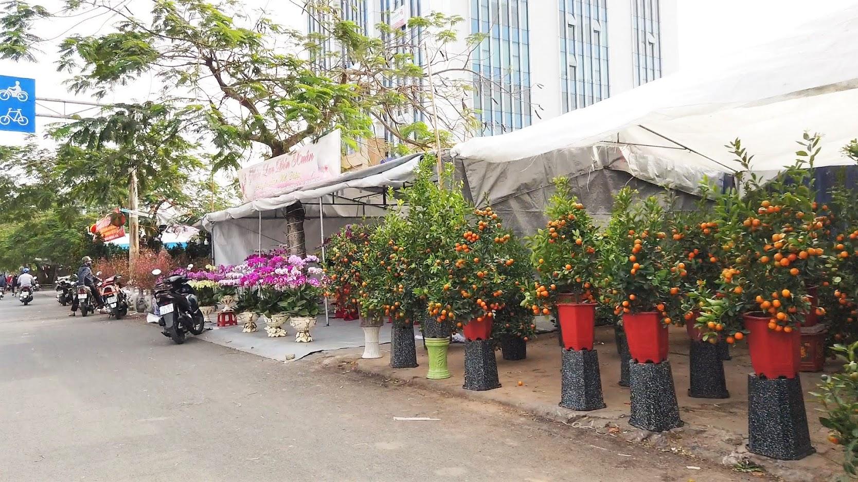 Chợ hoa Tết 2020 đường Lê Hồng Phong ở Hải Phòng 4